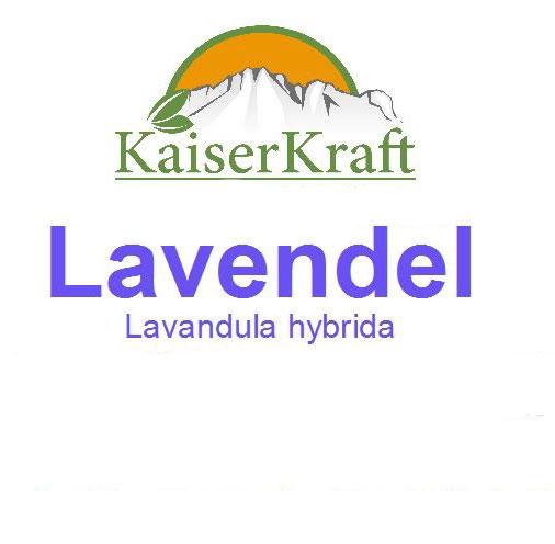 Lavendel - Ätherisches Öl